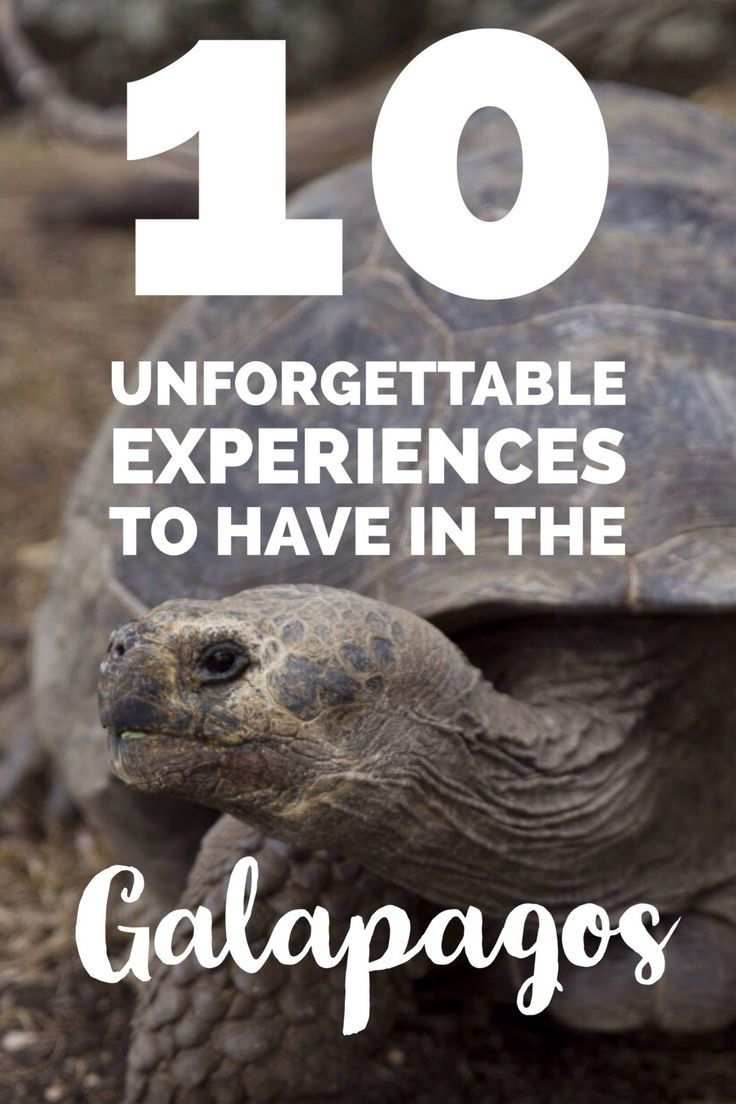 10 unforgettable Galapagos experiences   My Wandering Voyage travel blog