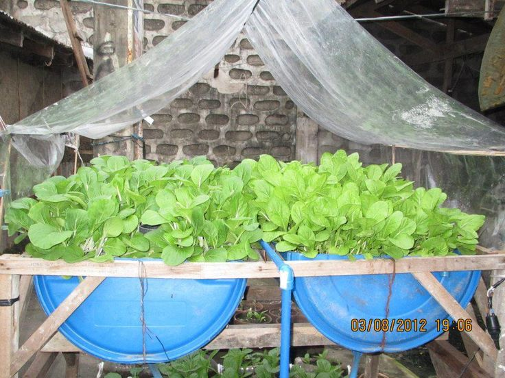 453 best images about aquaponics ideas on pinterest for Hydroponic grow bed