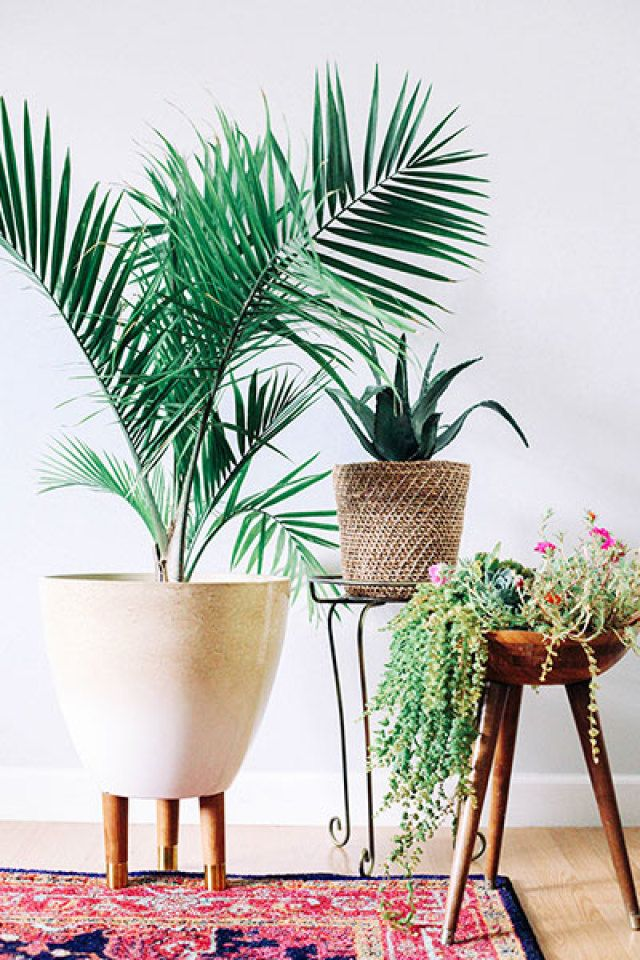 Tip: include inspired planters with fresh greenery in your mid-century modern space #GetDecorated