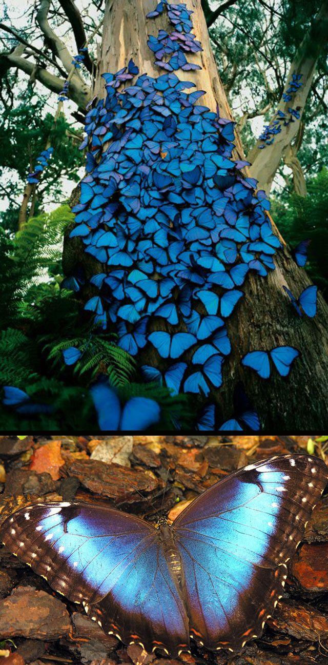 espectaculares mariposas posadas en el tronco de un árbol, una imagen para celebrar la magnificencia de la #naturaleza en el #diadelatierra