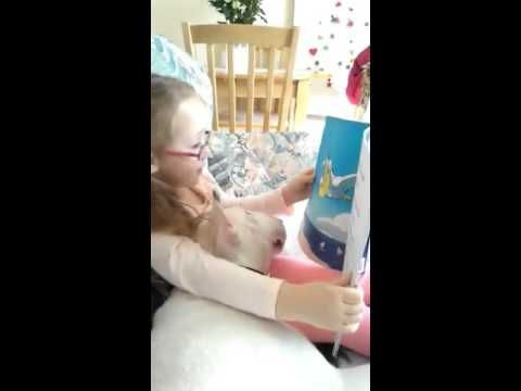 "#BestFriendsForever Girl Reads Book to English Bull Terrier   Layla reads ""Milo…"