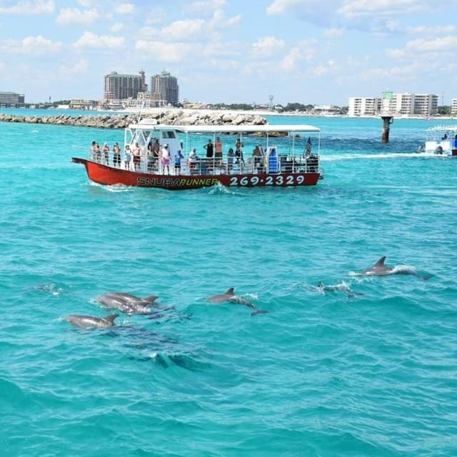 Need a goal for 2015? How about meet a dolphin. This #EmeraldCoasting photo is by Destin Snorkel.  http://www.emeraldcoastfl.com/things-to-do/ecotourism/wildlife/
