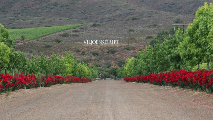 I promise you, there are some good wines at the end of this road - Viljoensdrift Wines - Consider a picnic on the Breede River.