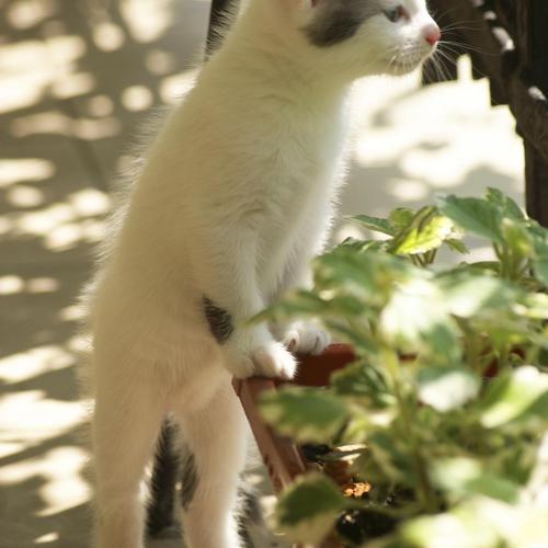 38 best répulsif pour chat images on Pinterest Cats, Kitty cats - mauvaises odeurs canalisations salle de bain