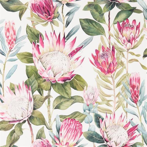 King Protea Wallpaper Con Immagini Parete Floreale