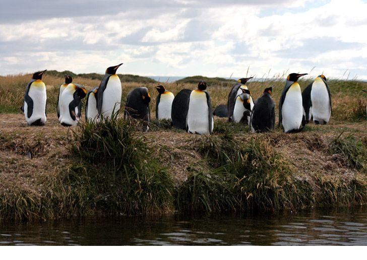 Parque Pingüino Rey - Nuestros Pingüinos