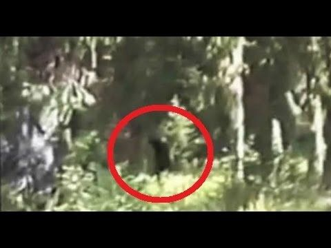 Bigfoot Family Filmed In Blue Mountains [Paul Freeman in 1994, so amazing.