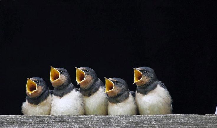Haha!  Looks like the choir, but I'm sure they're just waiting for lunch!