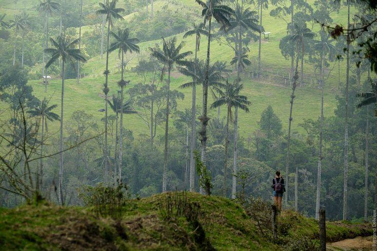 Cocora Valley, vrcholom Kolumbia.