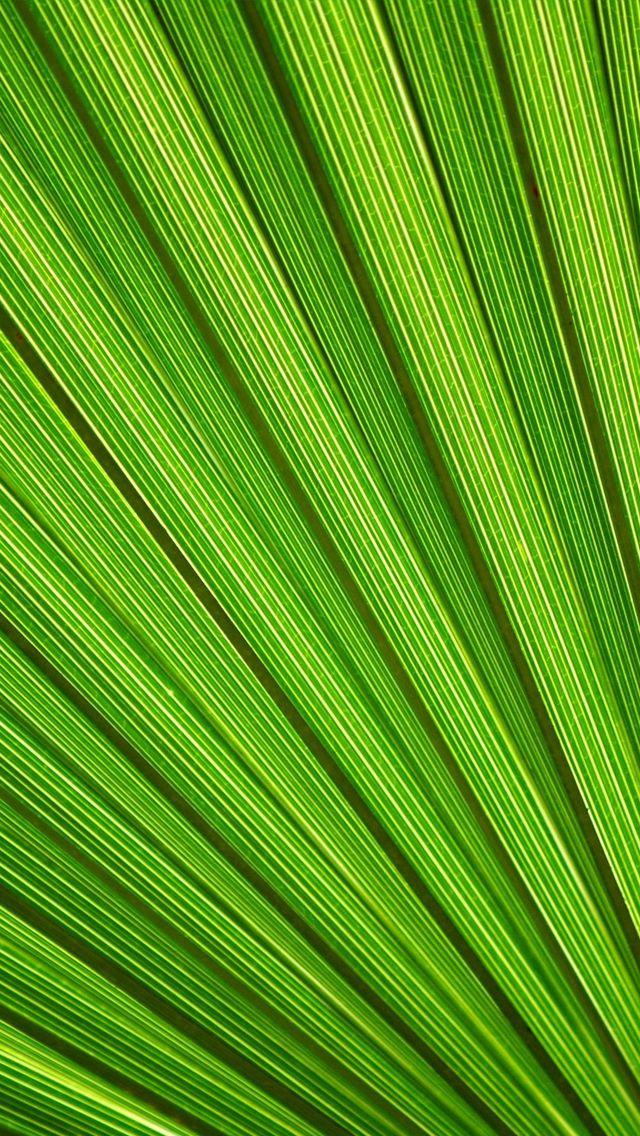 Iphone 5 Wallpaper Green Pattern