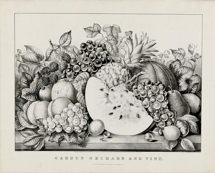 04836-fruit1.jpg (1077×868)