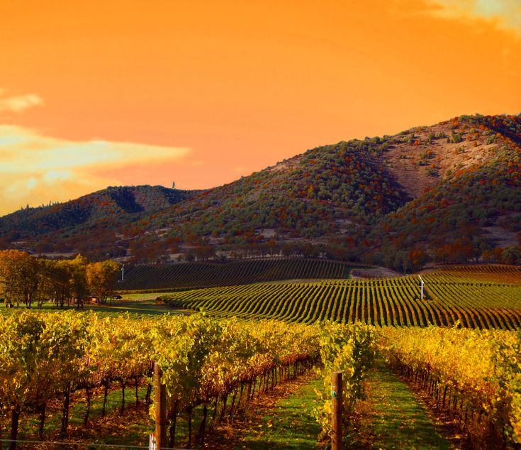 270 best landscape wine country images on pinterest for Best time to visit napa valley wine country
