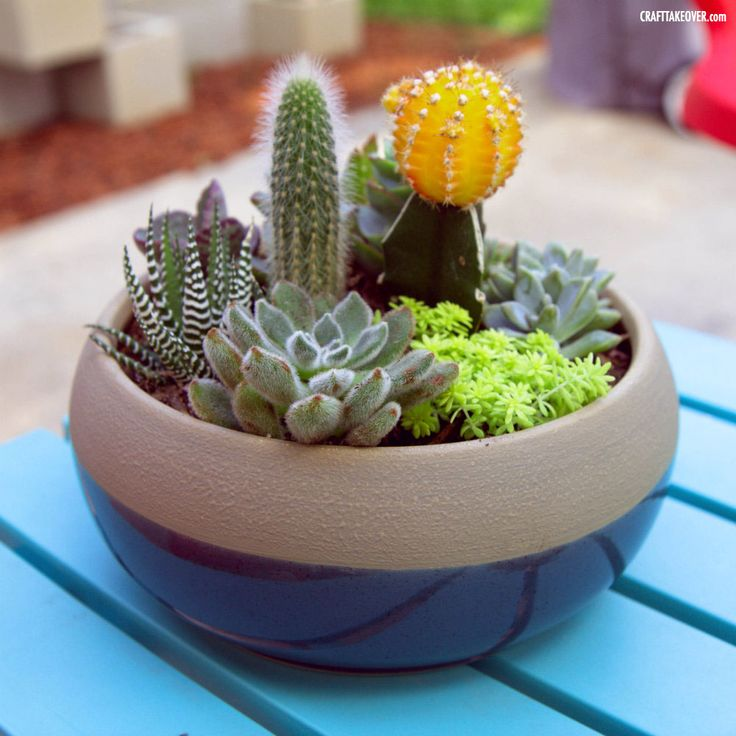 succulent container gardens - Google Search