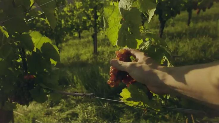 Summer Highs - Wine estates in South Styria