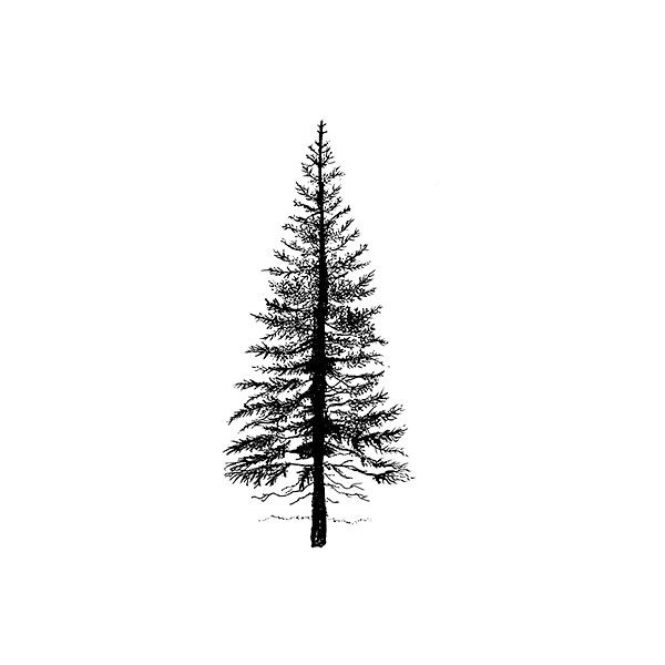 Lavinia Stamps on-line shop: Fir_tree 1 ❤ liked on Polyvore featuring drawings, art, trees, backgrounds and drawing