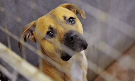 Dog pounds: the nightmare after Christmas for unwanted pets