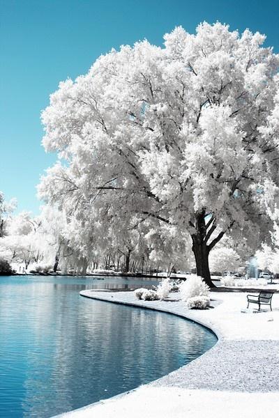 White Tree. Parece cenário de contos de fadas...