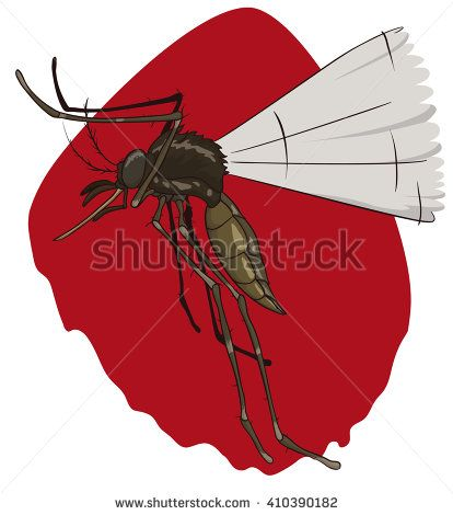 Hungry female mosquito looking for it's victims to bloodsucking in a red background.