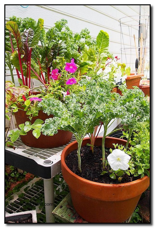 vegetable garden growing a garden for the whole family to take rh pinterest com
