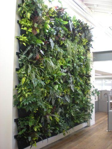 nice Indoor Vertical Garden / Flora Grubb