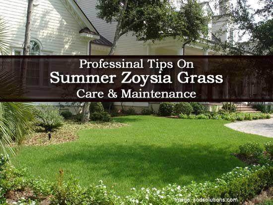 Professinal Tips On Summer Care & Maintenance Of Zoysia Grass