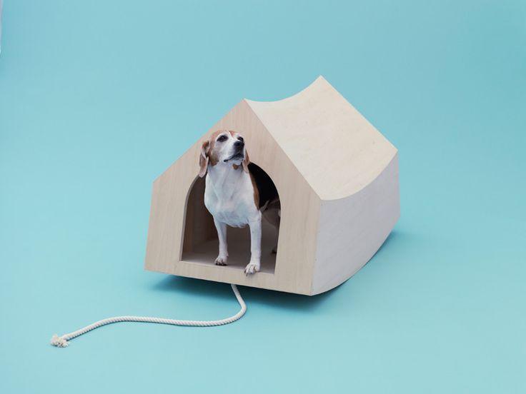 Hoy en día los perros viven junto con los seres humanos en una casa bajo el mismo techo y según las reglas de los...