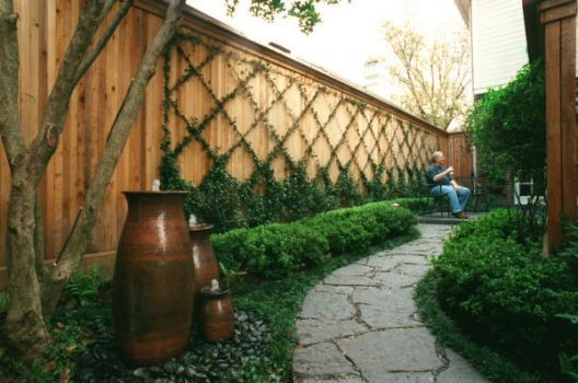 What shade tolerant vine will grow on a fence west for Garden fence features