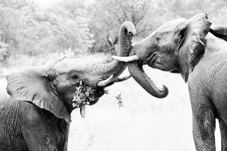 Strength by Tracy Wilkin on 500px.Elephants, Kruger National Park, Safari, South Africa, wildlife.