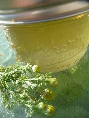 Living Off The Land: Foraging, Organic Gardening, Nature: How to make pineapple weed jelly (it's easy)