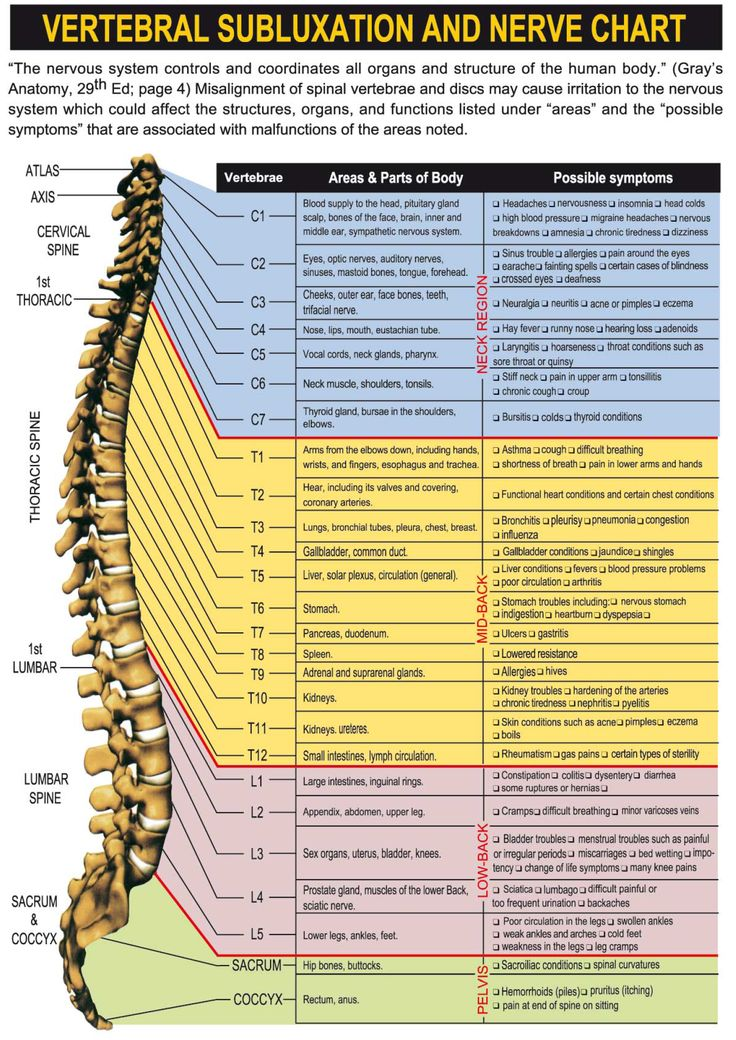 Nerve Chart Health And Beauty Chiropractic