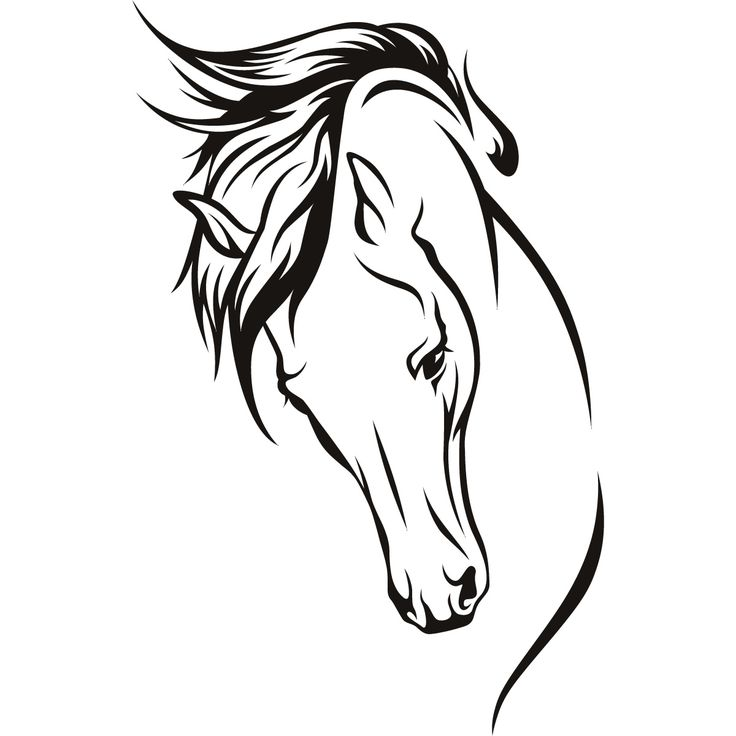 Line drawings hoeses | Horses Head Wall Art Stickers Wall Decal Transfers | eBay