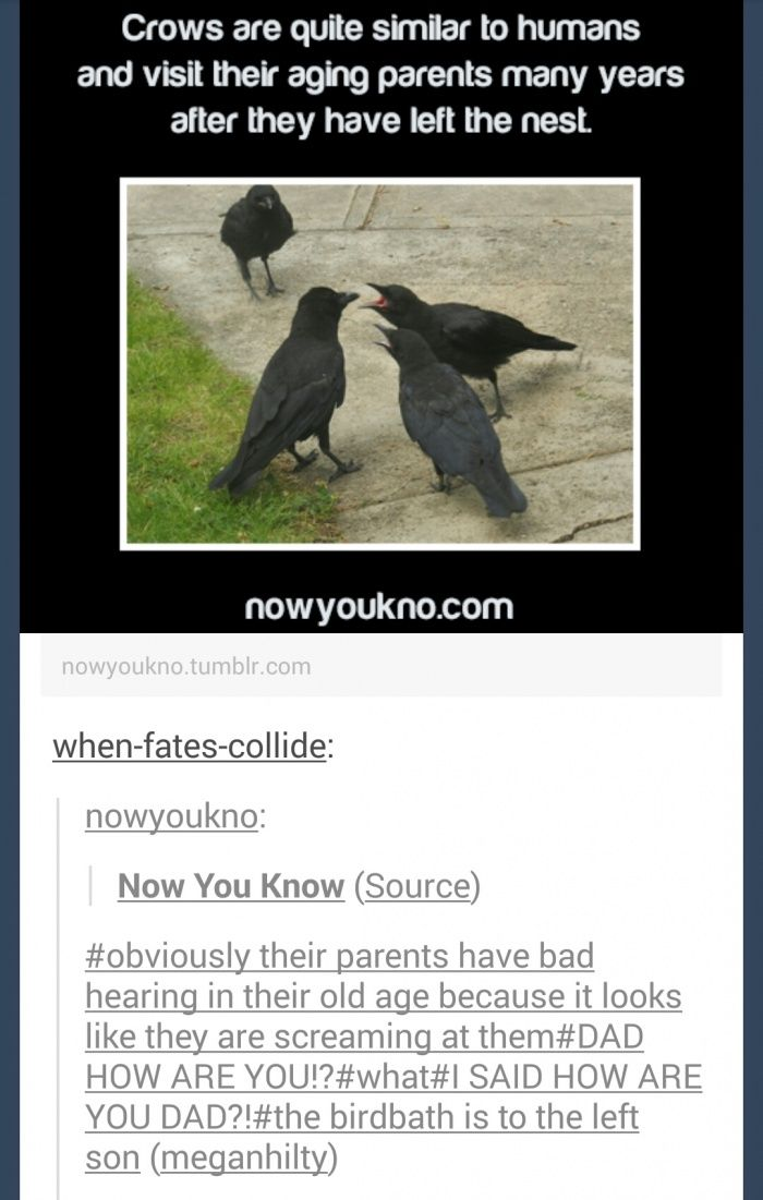 Crows funny pics, funny gifs, funny videos, funny memes, funny jokes. LOL Pics app is for iOS, Android, iPhone, iPod, iPad, Tablet