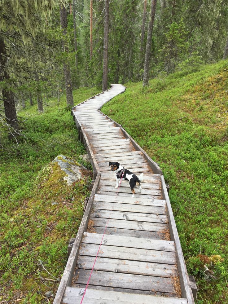 Värikallionkaarros. Hossan kansallispuisto. Retkeily. Luontopolku. Hiking. Finland