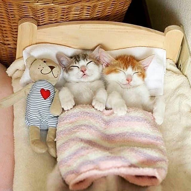 Марта, спокойной ночи кошечка прикольные картинки
