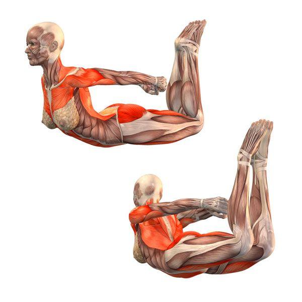Easy bow pose - Ardha Dhanurasana - Yoga Poses | YOGA.com