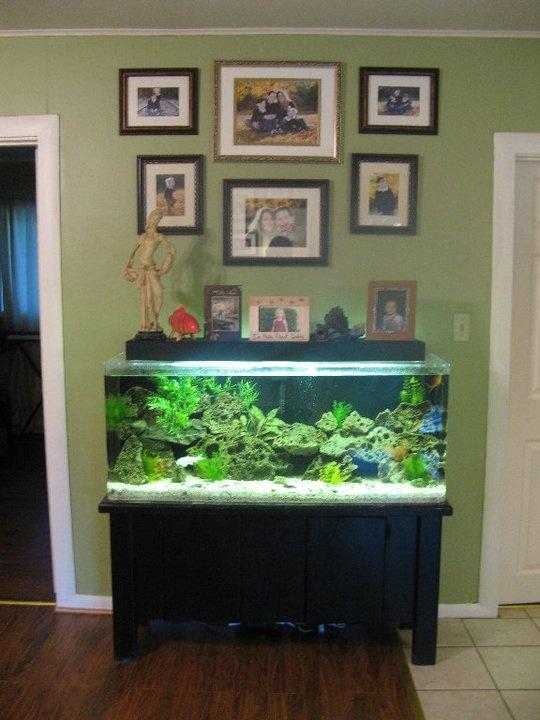 Fish Tank, Old Family Photos!