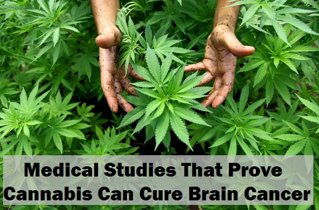 The Top 4 Medical Studies That Prove Cannabis Can Cure Brain Cancer | We Support Organic