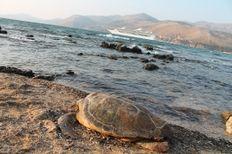 Fanari beach boat strike   | check it out at http://wildlifesense.com