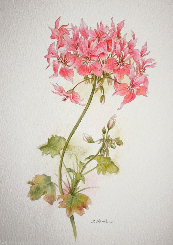 Watercolour painting of Geranium original art by TheMinervaGallery, £99.00