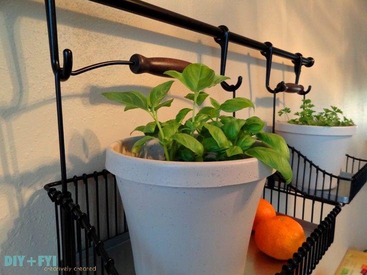 Best 25 kitchen herb gardens ideas on pinterest kitchen for Garden outlay ideas