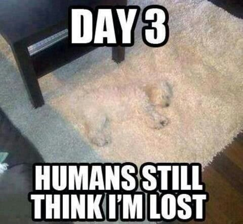 visit www.amazingdogtales.com for the best funny dog joke pics,inspirational dog stories and dog news.... dog, throw rug, funny