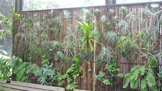 The ZEN Succulent Air Plant Wall