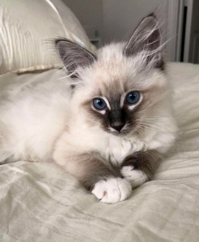Reddit The Front Page Of The Internet Gorgeous Cats Beautiful