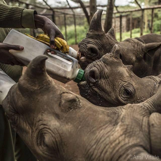 Rhino - Jobs