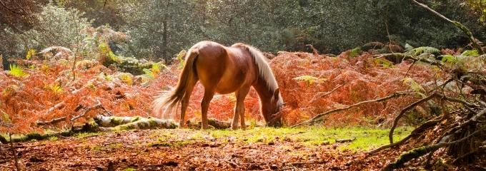 Welcome to the New Forest National Park blog - an insight into a unique landscape of ancient woodland, mire and heath intimately connected to the villages, small-holdings and farms of the Forest.