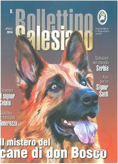 Gawęda jak nasze psy i koty: Salezjański piesek Grigio
