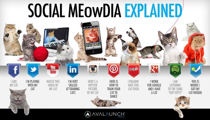 social media explained with cats