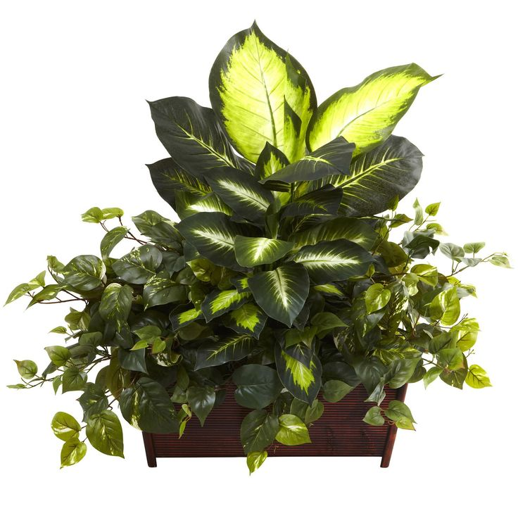 Nearly Natural Golden Dieffenbachia and Philo Silk Plant with Ledge Planter - 6803