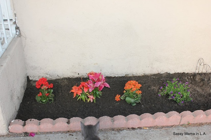 Curb appeal with lowes lowescreator 100 lowes gift