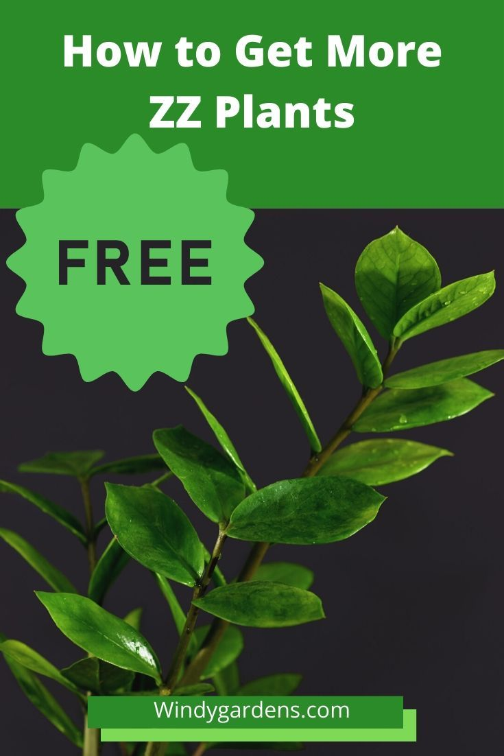 Propagate ZZ Plants And Get New Plants For Free in 2020 ...